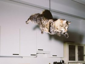 jumping-cats