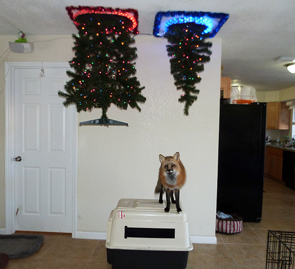 protecting-christmas-tree-from-dogs-cats-pets-15