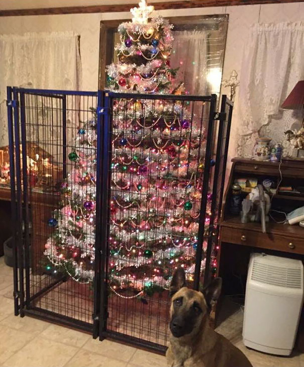 protecting-christmas-tree-from-dogs-cats-pets-30