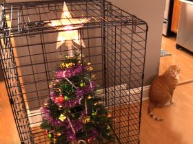 protecting-christmas-tree-from-dogs-cats-pets-4