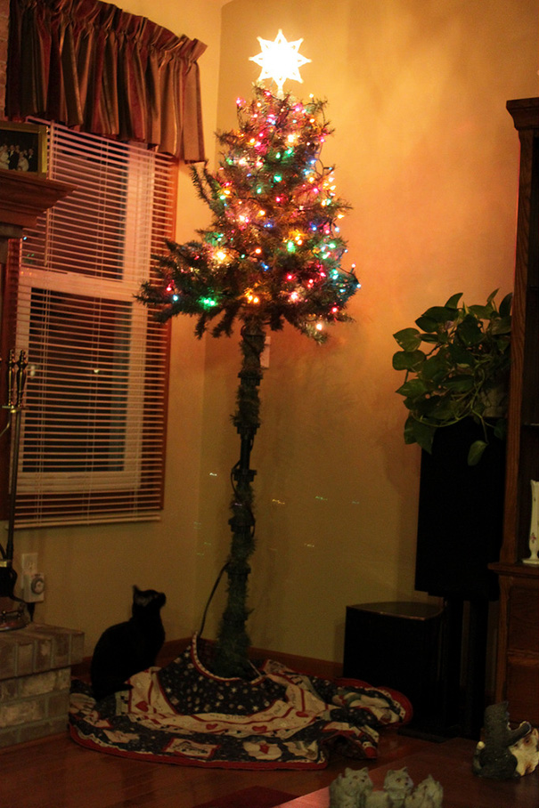 protecting-christmas-tree-from-dogs-cats-pets-5
