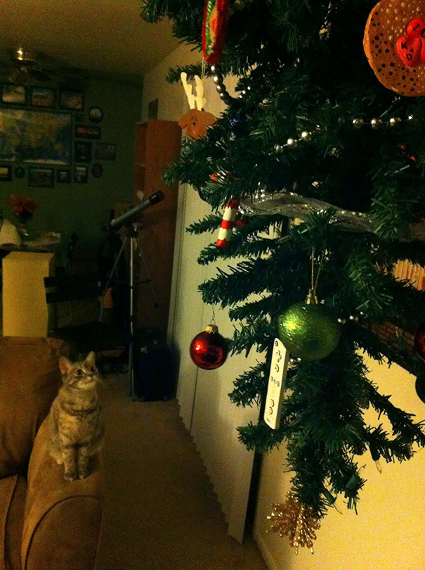 protecting-christmas-tree-from-dogs-cats-pets-7