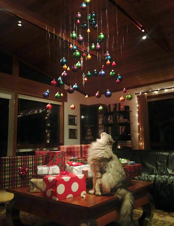 protecting-christmas-tree-from-dogs-cats-pets-8